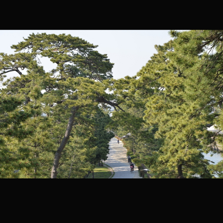 國家指定名勝「奧之細道的風景地 草加松原」(Big Bonsai Road)