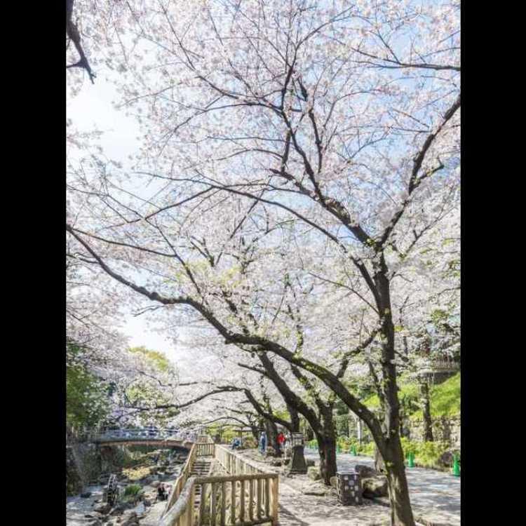 Otonashi Shinsui Park