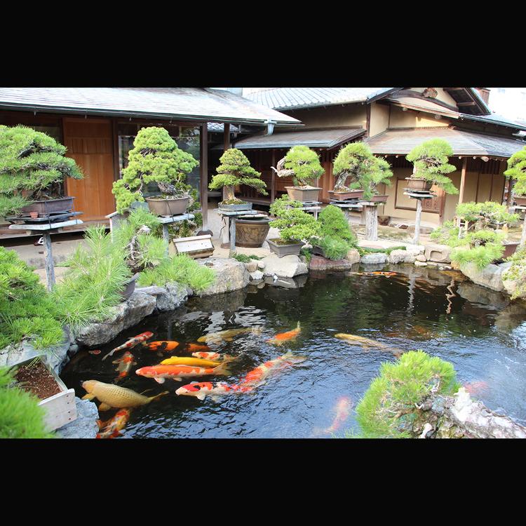Shunkaen Bonsai Museum