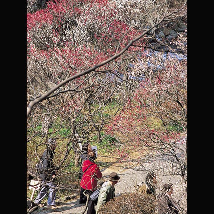 Atami Plum Garden