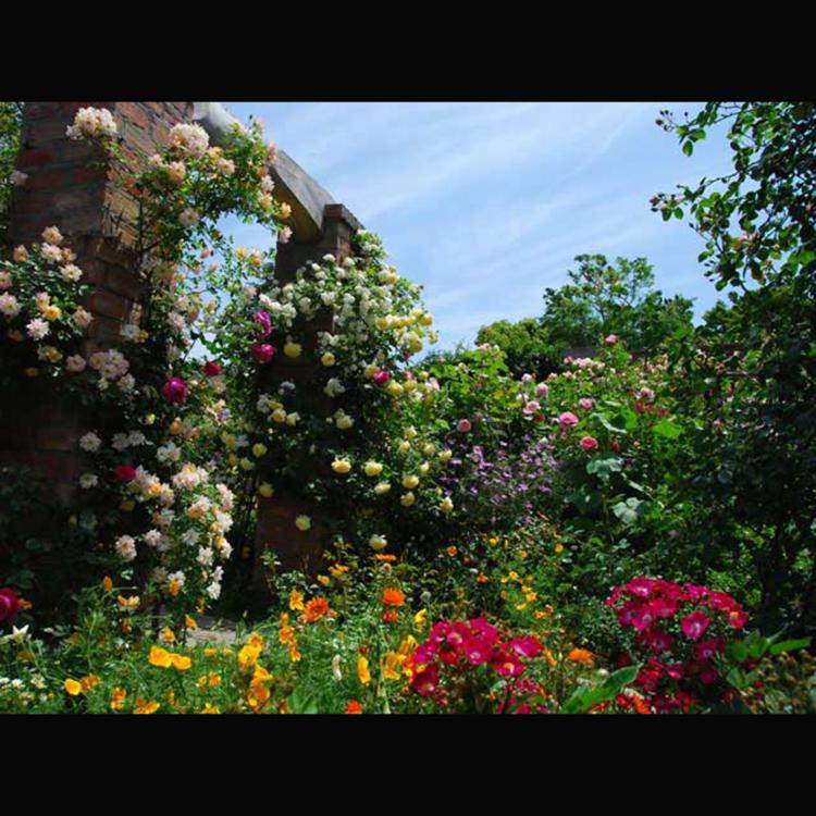 Akao Herb & Rose Garden