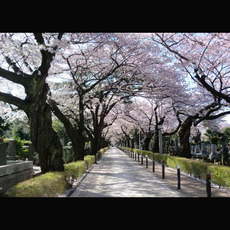 Aoyama Cemetery