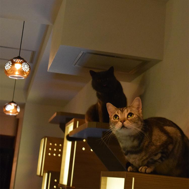 Cat Café Calico Kichijoji Store