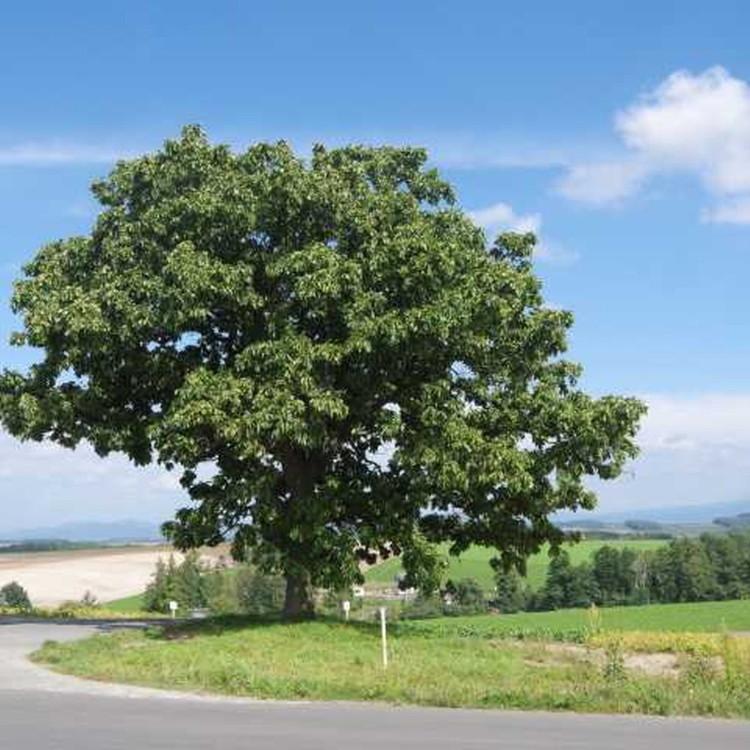 Sevn Stars Tree