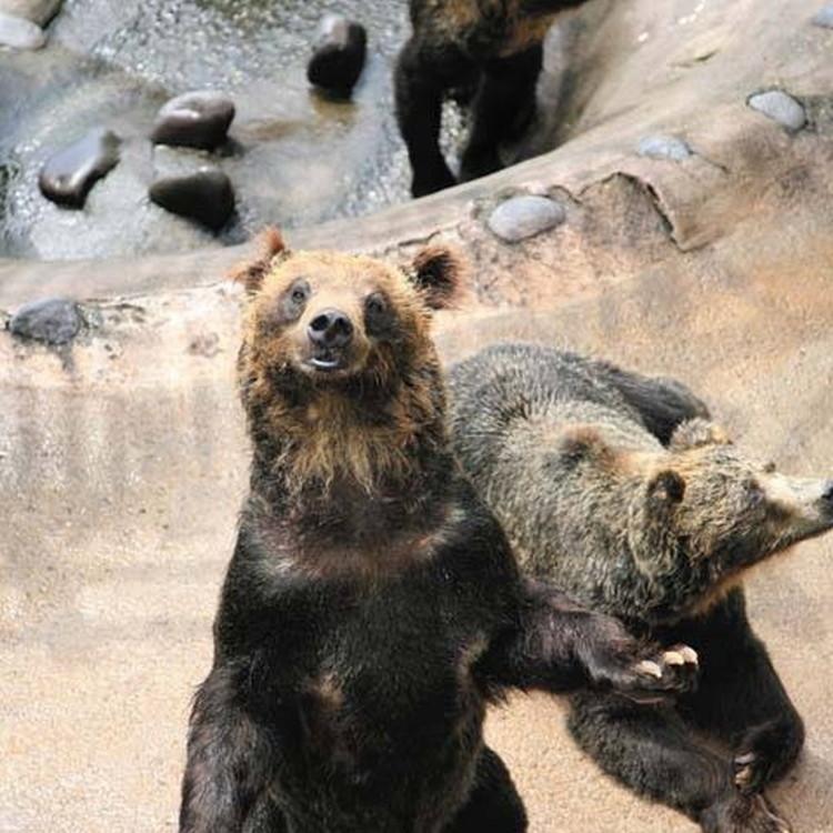 登别棕熊牧场
