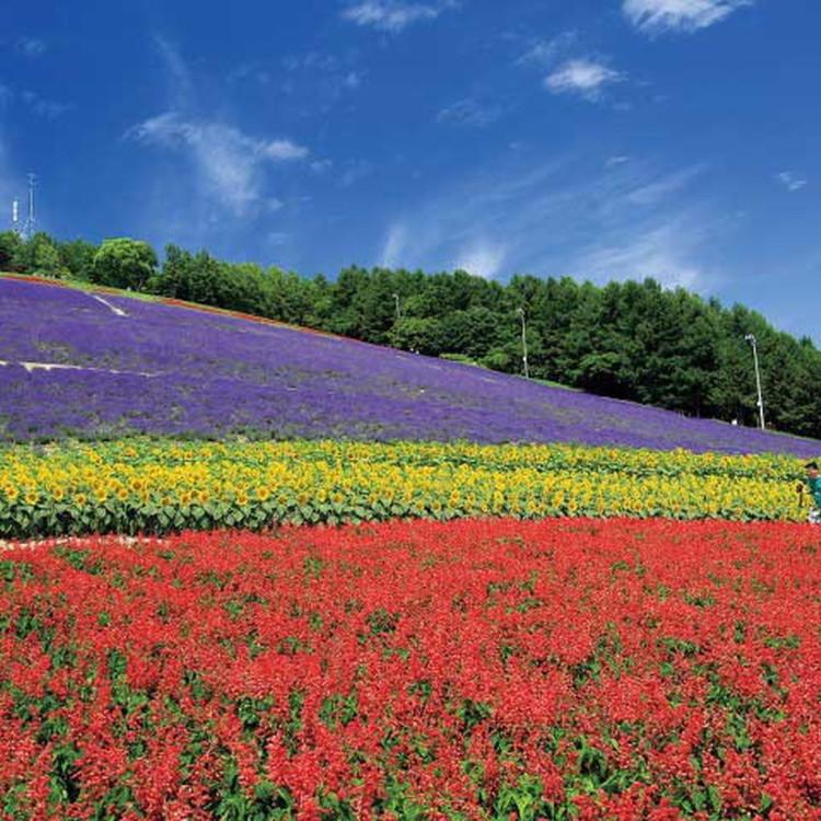 Choei Lavender Farm & Nakafurano Flower Park