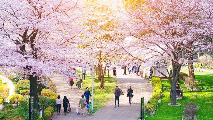 벚꽃 명소 Best10 -【도쿄편】 벚꽃시즌은 어디에서?