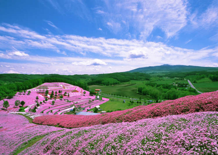 Checking Out Japan's Incredible Floral Landscapes! (Spring 2019 Edition)